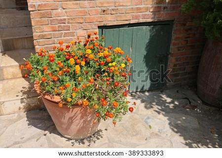 Cellar Door - stock photo
