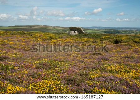 Celtic stone surrounded by Heather on Mulfrat Hill near New Mill in Cornwall - stock photo