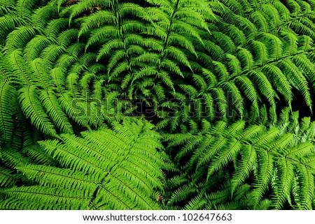 Center of fern tree in native bush, New Zealand - stock photo