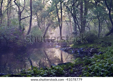 Central Park - New York City Azalea pond with sun streaming in on a foggy morning in summer - stock photo