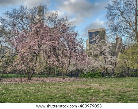 Central Park, New York City in early spring with flowering crab apple trees - stock photo