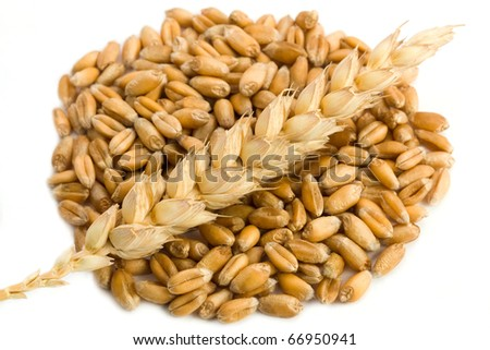 Cereal and wheat spike isolated on white background - stock photo