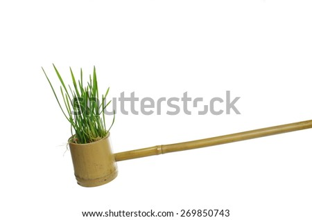 cereal with roots in bamboo ladle on white background - stock photo
