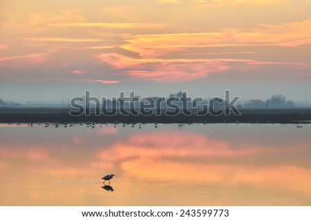 cervia' s saline,italy, in summer at sunset - stock photo