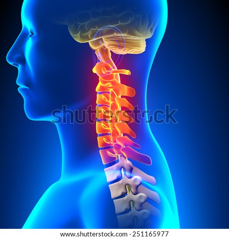 Cervical Spine Anatomy Pain concept - stock photo