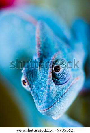 Chameleon eye - stock photo