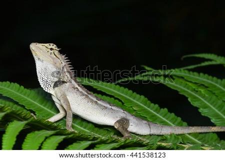 Chameleon green leaves on a black background - stock photo