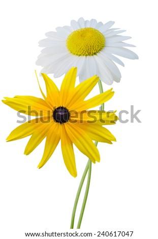 Chamomile and rudbeckia isolated on white background - stock photo