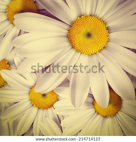 Chamomile close up - summer background. Retro style - stock photo