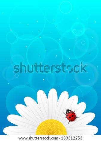 Chamomile flower and ladybird on blue background. Illustration. - stock photo