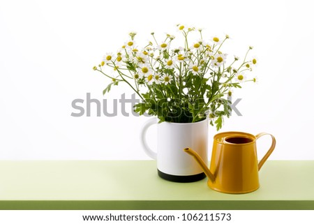 chamomile flower in cup and watering can on table - stock photo
