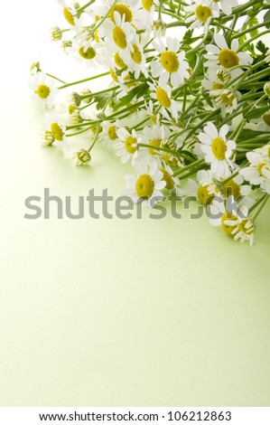 chamomile flower on green background - stock photo