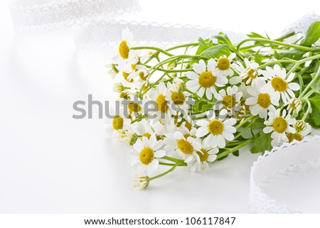 chamomile flower on white silk cloth - stock photo