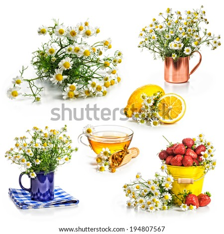 Chamomile flowers and herbal tea collection isolated on white background - stock photo