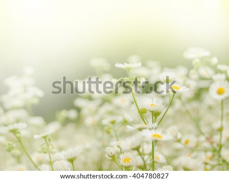 Chamomile flowers as background - stock photo