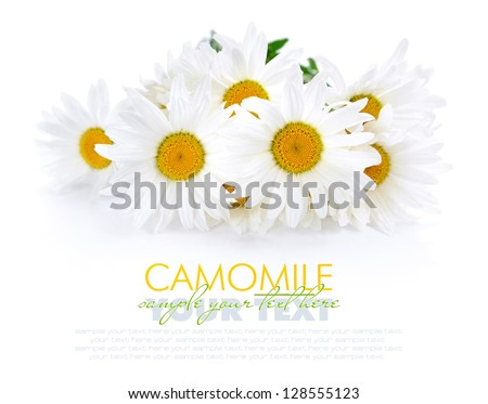 Chamomile flowers on a white background with space for text - stock photo