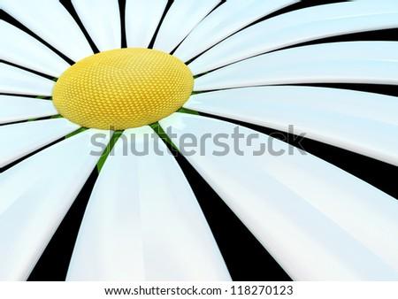 chamomile in focus - stock photo