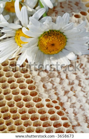 chamomiles  honey - stock photo