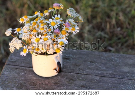Chamomiles in the old circle, views of field. - stock photo