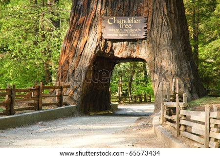 Chandelier Tree - stock photo