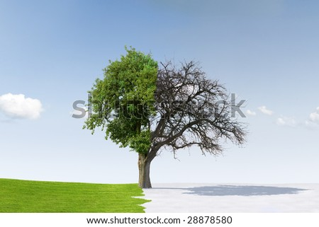 Change of seasons from winter to summer - stock photo
