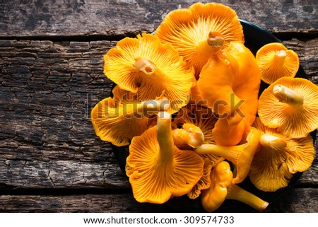 chanterelle mushrooms in a black plate closeup - stock photo