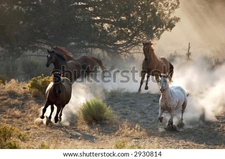 Charging Horses - stock photo