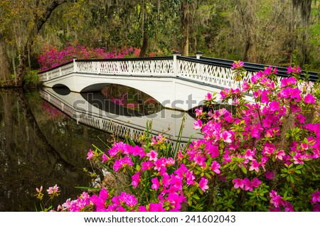 Charleston South Carolina Spring flowers and blooming azaleas garden in lowcountry SC - stock photo