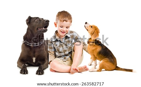 Cheerful boy sitting with a dog breed Staffordshire terrier and beagle dog isolated on a white background - stock photo