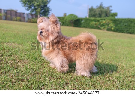 cheerful dog playing in the green garden - stock photo
