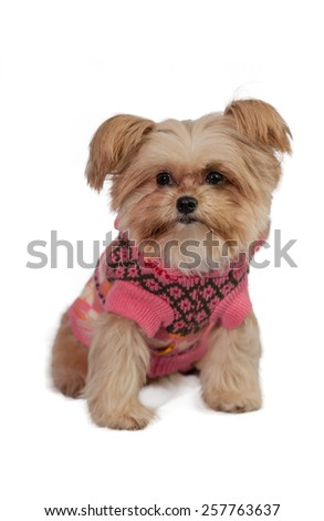cheerful mixed breed dog in winter coat isolated in white background with clipping path - stock photo