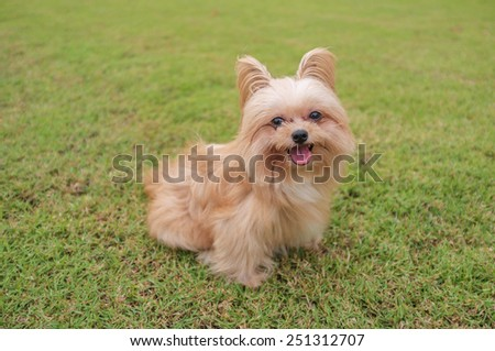 cheerful mixed breed dog sitting in the garden - stock photo