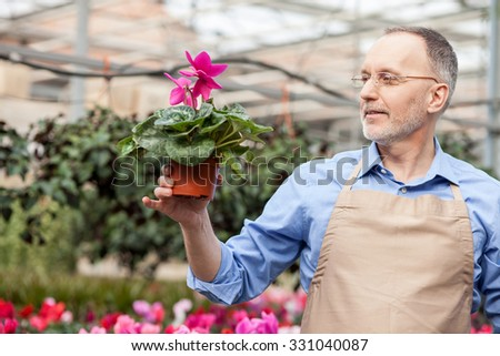 Cheerful old gardener is working at greenhouse. He is standing and holding flowerpot. The man is looking at it with admiration. He is smiling - stock photo