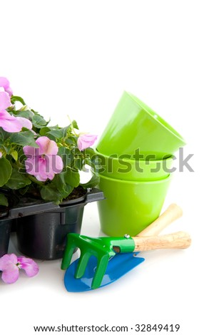 Cheerful pink Impatiens for the garden - stock photo