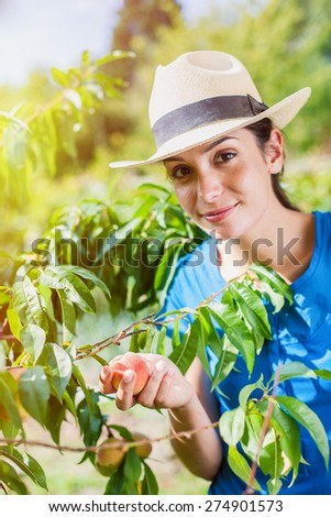 Cheerful woman picking peaches in the garden - stock photo