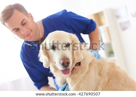 Cheerful young vet is examining state of pet - stock photo