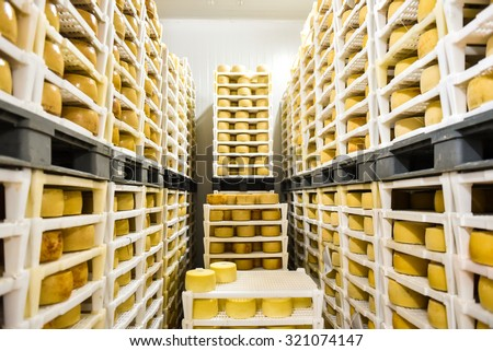 Cheese factory warehouse with shelves stacked with rows of cheese. - stock photo