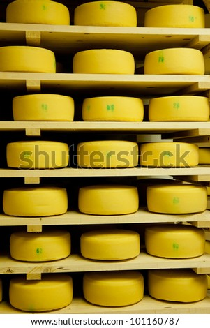 Cheese production - stock photo