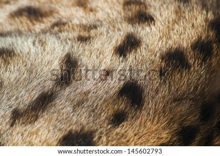 Cheetah fur - stock photo