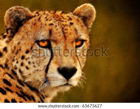 Cheetah's Stare A fractal filtered image of a Cheetah. Horizontal. - stock photo