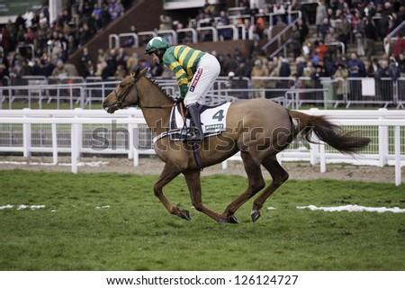 CHELTENHAM, GLOUCS-JANUARY 26: Jockey Barry Geraghty takes Quantitativeeasing out to the third race at Festival Trials Day, Cheltenham Racecourse, Cheltenham UK on Jan 26, 2013. - stock photo