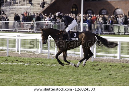 CHELTENHAM, GLOUCS-JANUARY 26: Jockey Dougie Costello takes Gullinbursti out to the second race at Festival Trials Day, Cheltenham Racecourse, Cheltenham UK on Jan 26, 2013. - stock photo