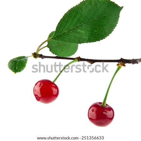 cherries on a white background - stock photo
