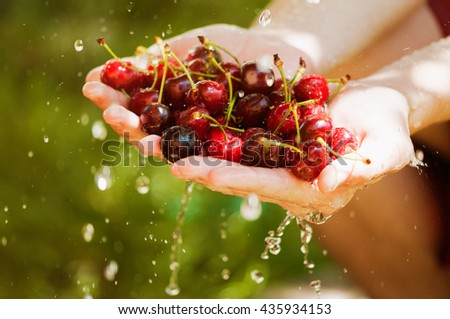 Cherries with water splash in a garden - stock photo