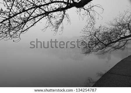 Cherry blossom and fog around Tidal Basin, Washington DC, United States - stock photo