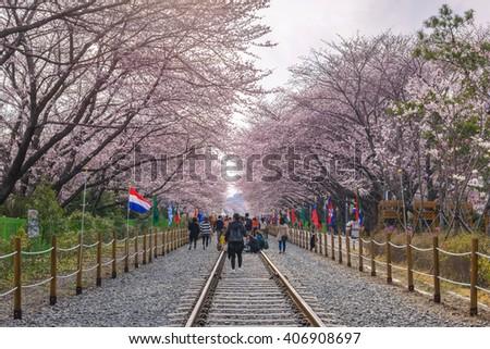 Cherry blossom at Gyeonghwa Station, Jinhae, South Korea - stock photo