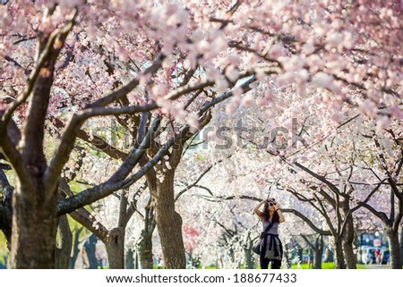 Cherry Blossom Festival. Washington, DC - stock photo