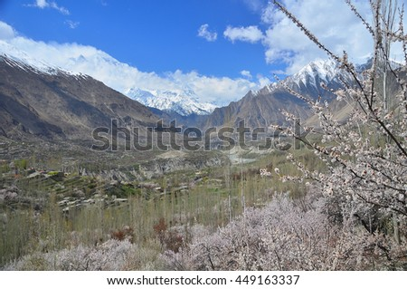 Cherry blossom season along Karakorum mountains at Hunza valley ,Pakistan - stock photo