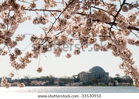 cherry blossom trees around the tidal basin and the Jefferson Memorial - stock photo