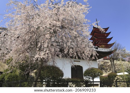 Cherry blossoms and shrine in national park - stock photo
